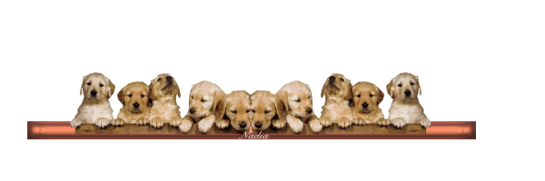 Barre chiens